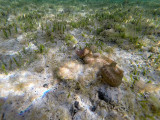 593 - Snorkeling ile Rodrigues janvier 2017 - G0116438 DxO Pbase.jpg