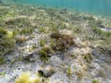 601 - Snorkeling ile Rodrigues janvier 2017 - G0136446 DxO Pbase.jpg
