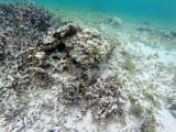 608 - Snorkeling ile Rodrigues janvier 2017 - GOPR6453 DxO Pbase.jpg