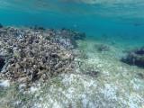 639 - Snorkeling ile Rodrigues janvier 2017 - GOPR6484 DxO Pbase.jpg