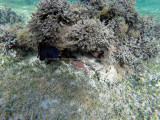642 - Snorkeling ile Rodrigues janvier 2017 - GOPR6487 DxO Pbase.jpg