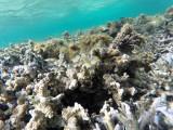 643 - Snorkeling ile Rodrigues janvier 2017 - GOPR6488 DxO Pbase.jpg