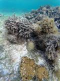 646 - Snorkeling ile Rodrigues janvier 2017 - GOPR6491 DxO Pbase.jpg