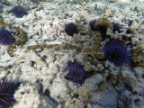 662 - Snorkeling ile Rodrigues janvier 2017 - GOPR6507 DxO Pbase.jpg