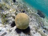 676 - Snorkeling ile Rodrigues janvier 2017 - GOPR6521 DxO Pbase.jpg