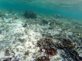 683 - Snorkeling ile Rodrigues janvier 2017 - GOPR6528 DxO Pbase.jpg