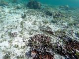 684 - Snorkeling ile Rodrigues janvier 2017 - GOPR6529 DxO Pbase.jpg