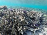 698 - Snorkeling ile Rodrigues janvier 2017 - GOPR6543 DxO Pbase.jpg