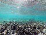 705 - Snorkeling ile Rodrigues janvier 2017 - GOPR6550 DxO Pbase.jpg