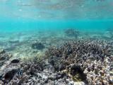 706 - Snorkeling ile Rodrigues janvier 2017 - GOPR6551 DxO Pbase.jpg