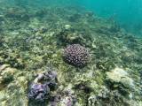 714 - Snorkeling ile Rodrigues janvier 2017 - GOPR6560 DxO Pbase.jpg