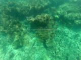 719 - Snorkeling ile Rodrigues janvier 2017 - GOPR6565 DxO Pbase.jpg