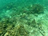 725 - Snorkeling ile Rodrigues janvier 2017 - GOPR6571 DxO Pbase.jpg