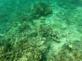 726 - Snorkeling ile Rodrigues janvier 2017 - GOPR6572 DxO Pbase.jpg