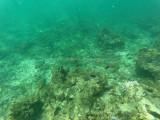 728 - Snorkeling ile Rodrigues janvier 2017 - GOPR6574 DxO Pbase.jpg