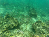 729 - Snorkeling ile Rodrigues janvier 2017 - GOPR6575 DxO Pbase.jpg