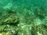 730 - Snorkeling ile Rodrigues janvier 2017 - GOPR6576 DxO Pbase.jpg