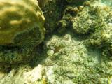 734 - Snorkeling ile Rodrigues janvier 2017 - GOPR6580 DxO Pbase.jpg