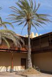 1346 Vacances aux iles Canaries nov 2017 - IMG_1448 DxO Pbase.jpg