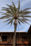 1348 Vacances aux iles Canaries nov 2017 - IMG_1450 DxO Pbase.jpg