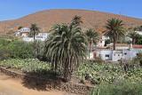 1396 Vacances aux iles Canaries nov 2017 - IMG_1513 DxO Pbase.jpg