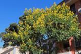 2964 Vacances aux iles Canaries nov 2017 - IMG_3216 DxO Pbase.jpg