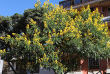 2965 Vacances aux iles Canaries nov 2017 - IMG_3217 DxO Pbase.jpg