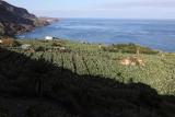 3912 Vacances aux iles Canaries nov 2017 - IMG_4271 DxO Pbase.jpg