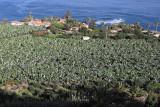3917 Vacances aux iles Canaries nov 2017 - IMG_4276 DxO Pbase.jpg
