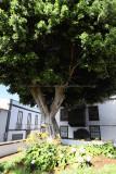 3973 Vacances aux iles Canaries nov 2017 - IMG_4344 DxO Pbase.jpg