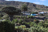 3987 Vacances aux iles Canaries nov 2017 - IMG_4360 DxO Pbase.jpg