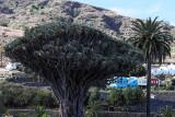 3993 Vacances aux iles Canaries nov 2017 - IMG_4369 DxO Pbase.jpg