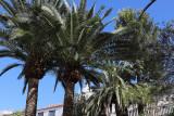 4044 Vacances aux iles Canaries nov 2017 - IMG_4424 DxO Pbase.jpg