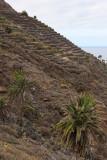 3774 Vacances aux iles Canaries nov 2017 - IMG_4110 DxO Pbase.jpg