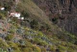 4144 Vacances aux iles Canaries nov 2017 - IMG_4545 DxO Pbase.jpg