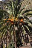 4188 Vacances aux iles Canaries nov 2017 - IMG_4596 DxO Pbase.jpg