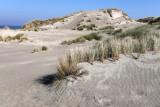 Promenade sur le chemin d'accès à la mer de Saint-Quentin en Tourmont (dune de la Pyramide)