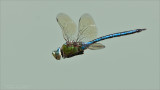 Dragonfly in Flight - Tanzania 2011