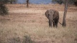 Tarangire National Park - Elephant