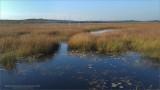 Bruce Peninsula Landscapes - Samsung Camera