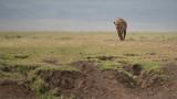 Hyena on the Ridge