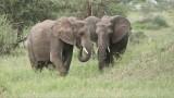 Elephants Dining