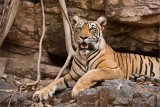 Tigress Lightning on the Rocks!