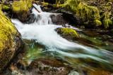 Elkhorn Waters