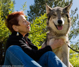 024_sedona-wolf-week-plan-b.jpg