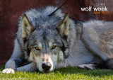 031_sedona-wolf-week-plan-b.jpg