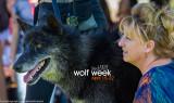 032_sedona-wolf-week-plan-b.jpg