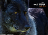 029_sedona-wolf-week-plan-b.jpg