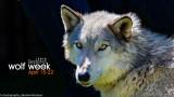 035_sedona-wolf-week-plan-b.jpg