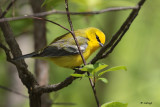Oiseaux - Pointe-Pelée 2017- Birds